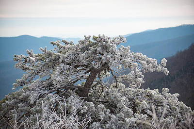 Hoarfrost In The Blue Ridge Mountains Art Print