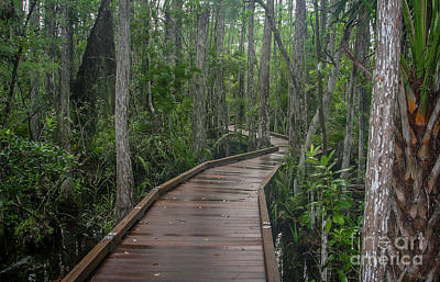 Photograph - Hog Hammock Boardwalk by Tom Claud