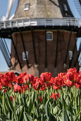 Photograph - Holland Tulip Festival Windmill  by John McGraw