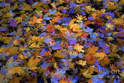 Photograph - Home Leaves2 by Merle Grenz