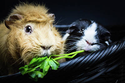 Photograph - Honey And Kit Share Cilantro by Jeanette Fellows