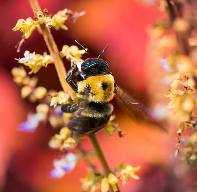 Photograph - Honey Bee Serenade by Karen Wiles
