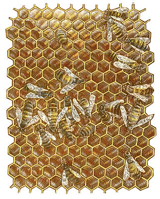 Drawing - Honey Bees by Clint Hansen