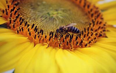 Photograph - Honey by Candice Trimble