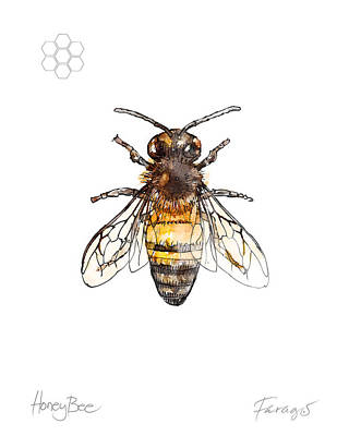 Drawing - HoneyBee by Peter Farago
