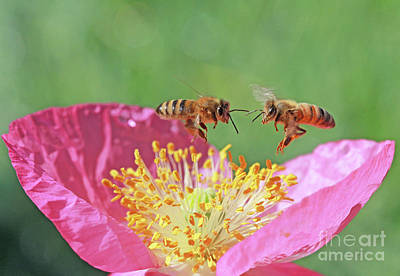 Wall Art - Photograph - Honeybees by Gary Wing