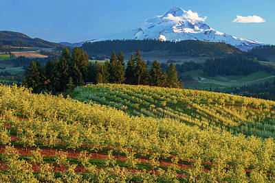 Royalty-Free and Rights-Managed Images - Hood River Orchards by Patrick Campbell