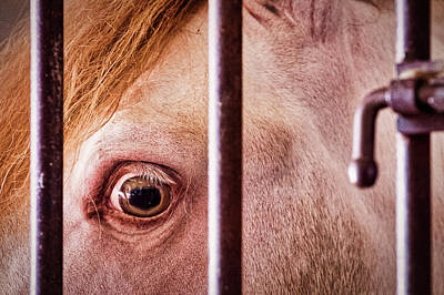 Photograph - Horse Behind Bars by Stuart Litoff