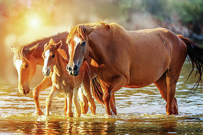Animals Photos - Horse Family Walking in Lake at Sunrise by Good Focused
