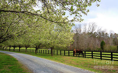 Photograph - Horse Farm In The Country by Jill Lang