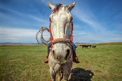Photograph - Horse Head by Todd Klassy