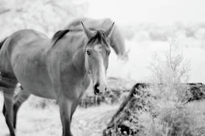 Horse In Infrared Art Print