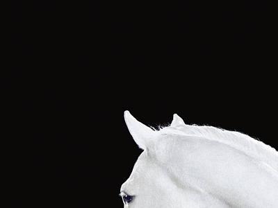 Photograph - Horse by John Ross