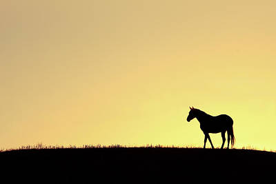 Quarter Horses Photograph - Horse On A Hilltop by Todd Klassy