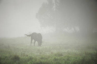 Photograph - Horse On A Misty Summer Morn by Mary Lee Dereske