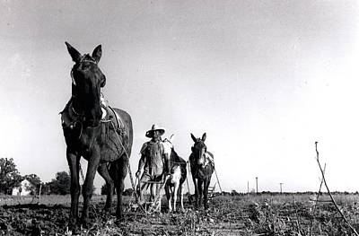 Photograph - Horse Plow by John Jr Gholson
