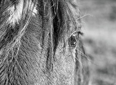 Blue Hues - Horse Portrait 2 by Andrea Anderegg