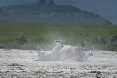 Photograph - Horse Rolling On The Dust by Paula Mitchell