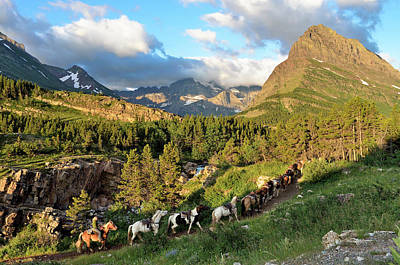 Walking Photograph - Horse Train, Many Glacier Area, Glacier by Michael Wheatley