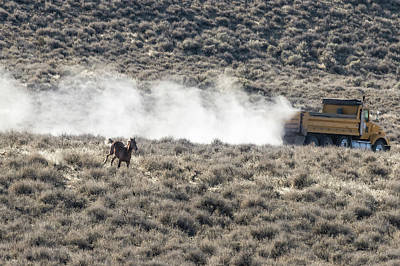 Photograph - Horse Vs Truck On Public Lands by Belinda Greb