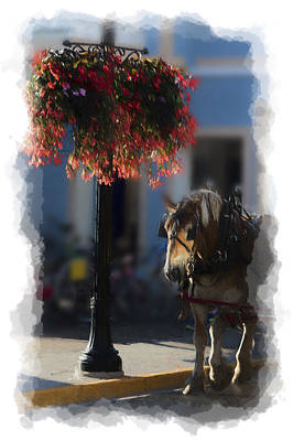 Photograph - Horse Waiting Under Flowers by Dan Friend