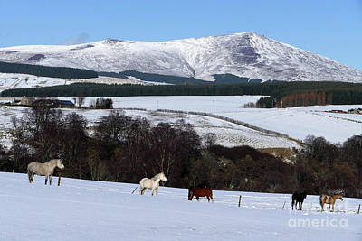 Photograph - Horses - Ben Rinnes by Phil Banks