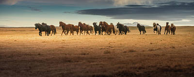 Photograph - Horses Gallop On The Iceland Plateau by Coolbiere Photograph