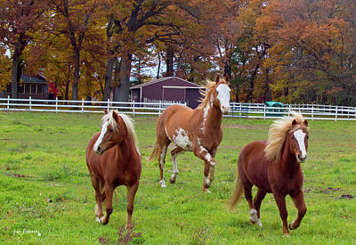 Photograph - Horses In Autumn Closeup by Ken Figurski