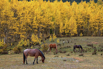 Photograph - Horses In Autumn by Darlene Bushue