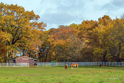 Photograph - Horses In Autumn by Ken Figurski
