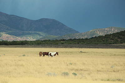 Photograph - Horses In Field In Utah by Colleen Cornelius