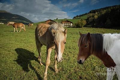 Mixed Media - Horses In Sarntal by Eva Lechner