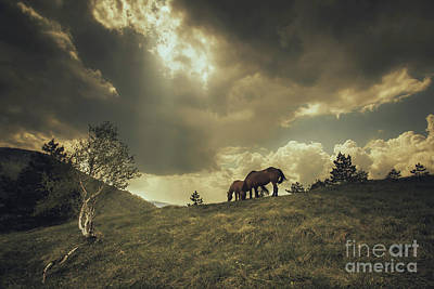 Photograph - Horses In The Highlands by R Gazali