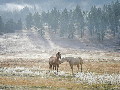 Photograph - Horses On A Montana Ranch by Keith Boone