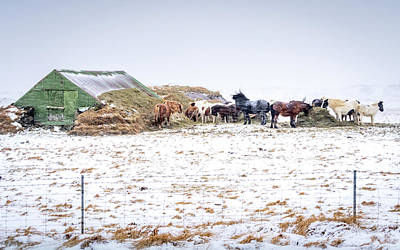 Photograph - Horses Sheltering by Framing Places