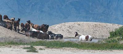 Photograph - Horses Taking A Bath by Paula Mitchell
