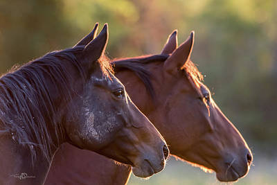 Photograph - Horses by Torbjorn Swenelius