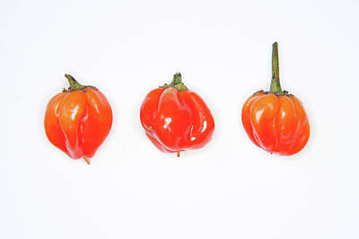 Photograph - Hot Red Chillies by Helen Northcott