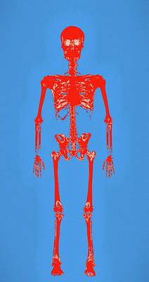 Painting - Human Skeleton Pop Art by Dan Sproul