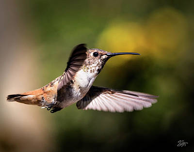 Photograph - Hummer 1 by Endre Balogh