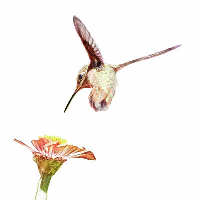 Photograph - Hummer Dance by Wes and Dotty Weber