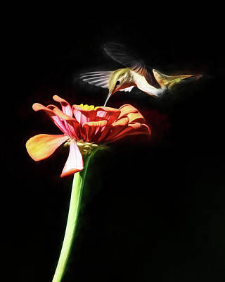 Photograph - Hummer On Black by Wes and Dotty Weber