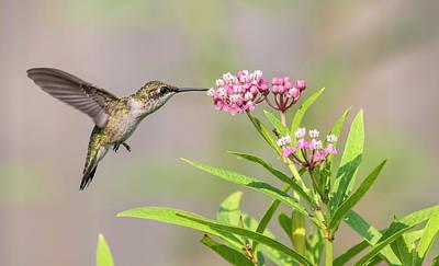 Photograph - Hummingbird 2018-1 by Thomas Young