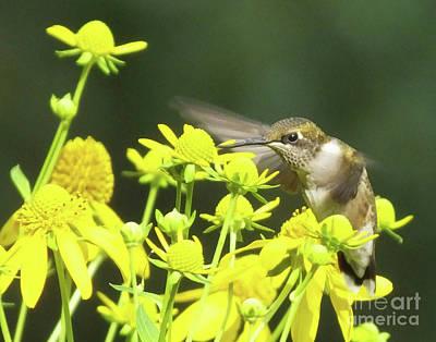 Photograph - Hummingbird 73 by Lizi Beard-Ward