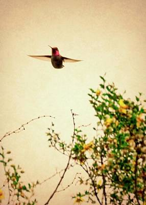 Photograph - Hummingbird And Creosote Blooming by Judy Kennedy