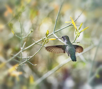 Photograph - Hummingbird And Yellow Flowers  by Saija Lehtonen