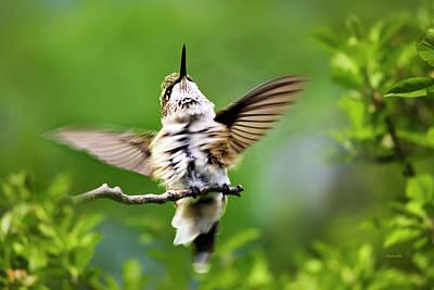 Movie Tees - Hummingbird Happy Dance by Christina Rollo