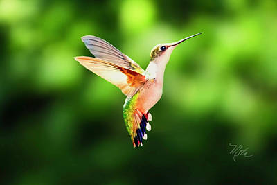 Photograph - Hummingbird Hovering by Meta Gatschenberger