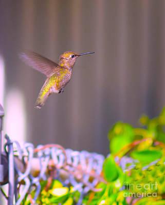 Photograph - Hummingbird In Flight by Sherry Little Fawn Schuessler