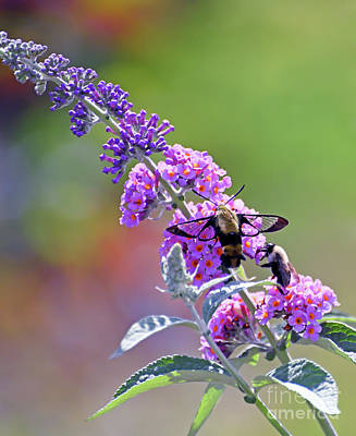 Grimm Fairy Tales Royalty Free Images - Hummingbird Moth and Bee Share the Butterfly Bush Royalty-Free Image by Kerri Farley